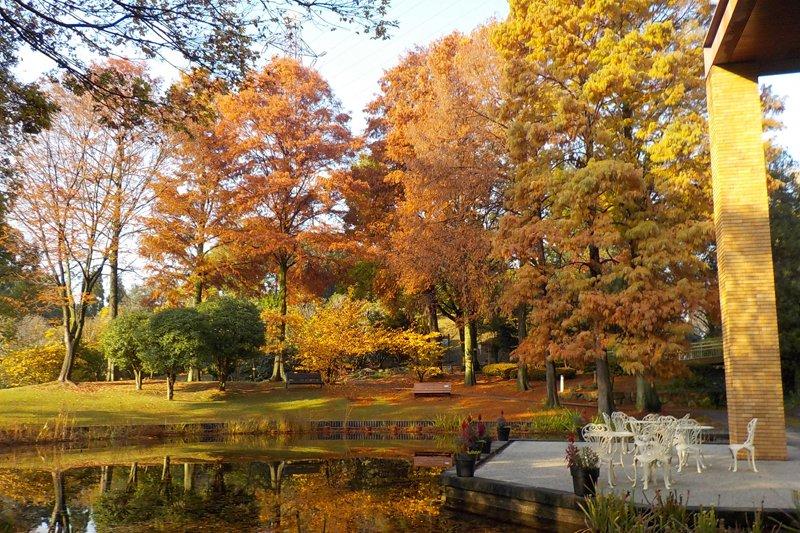 自然の美しさを堪能できる(都市緑化植物園)
